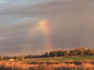 12. Rainbow Mary